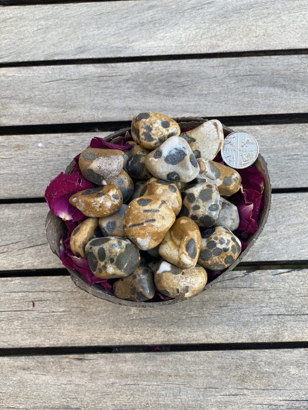 Cheetah Jasper with 5p